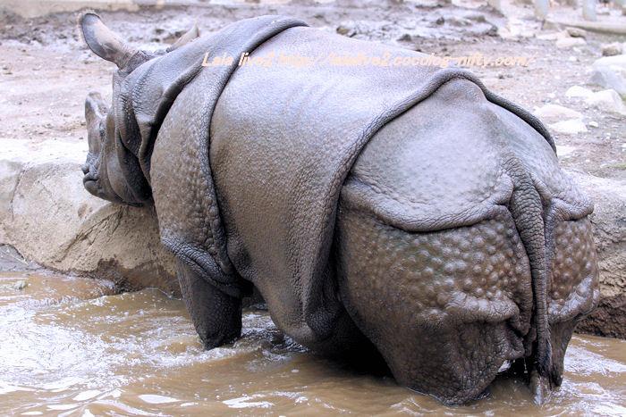 Rhino201410074