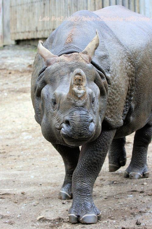 Rhino201410075