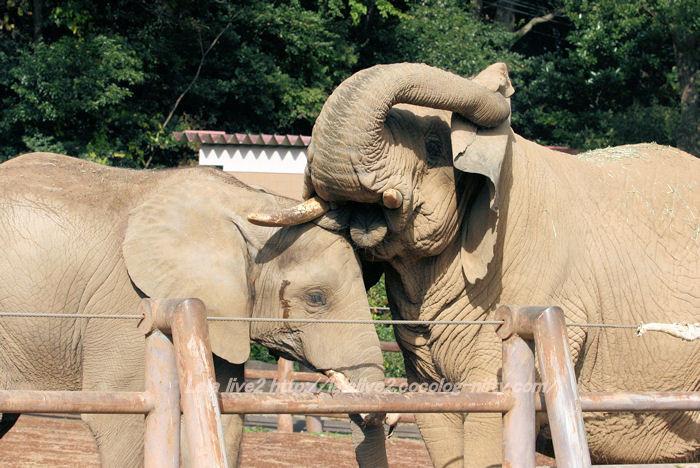 Elephants201411101
