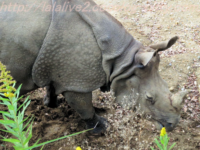 Rhino201411101