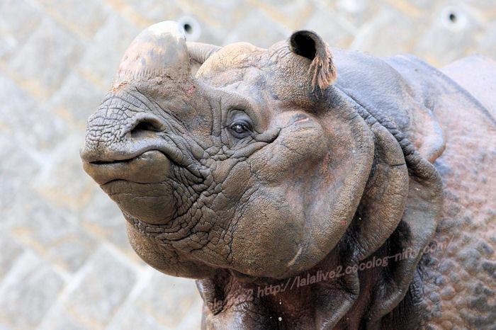 Rhino201411102