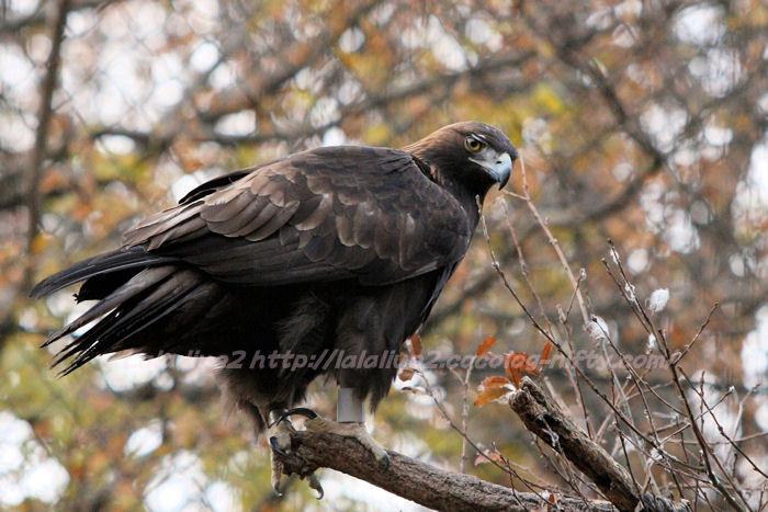 Eagle20141215