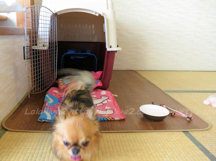 Shibugoe20150105076