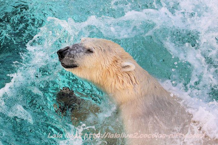 Polarbear201501201