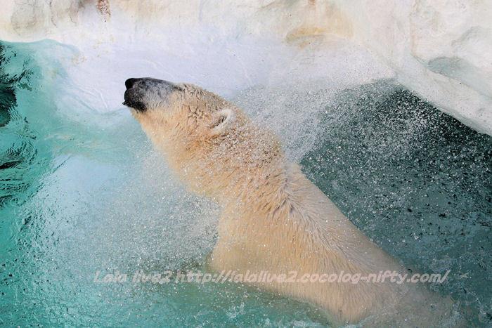 Polarbear201501202