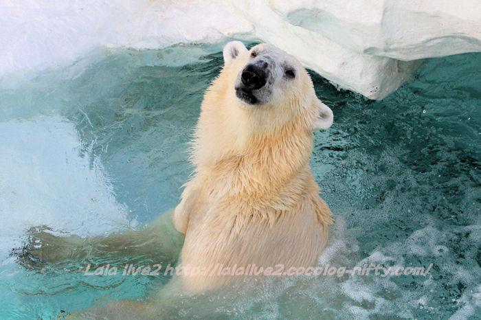 Polarbear201501203