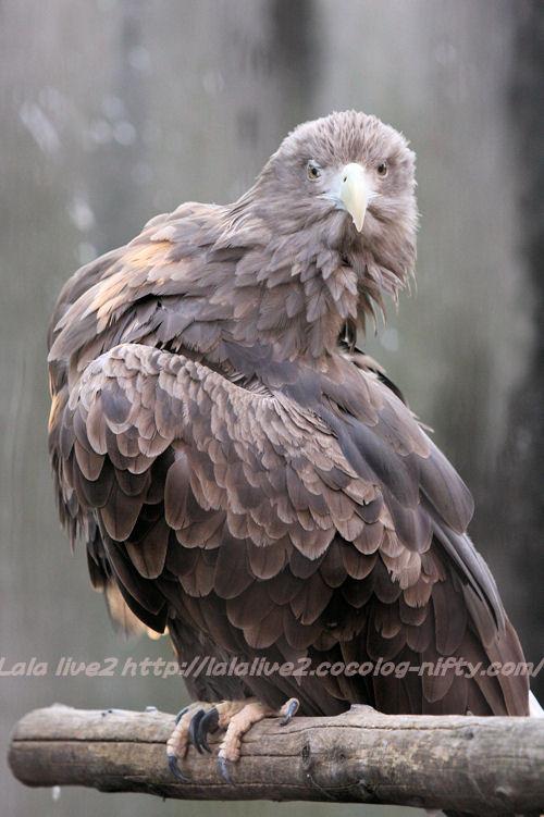 Eagle20150120