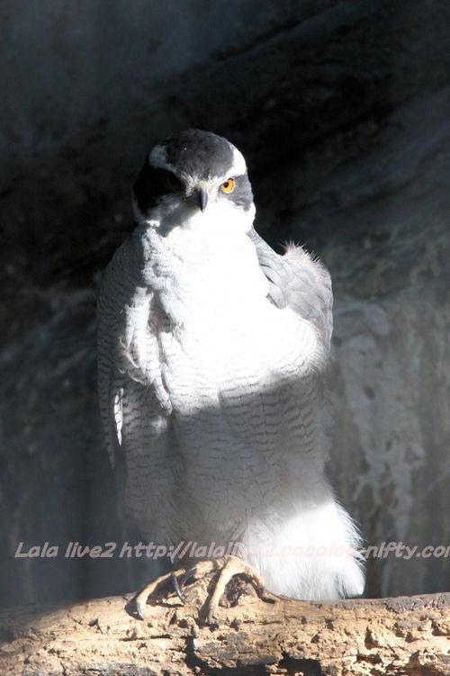 Hawk20150120