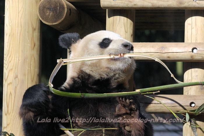 Panda20150120