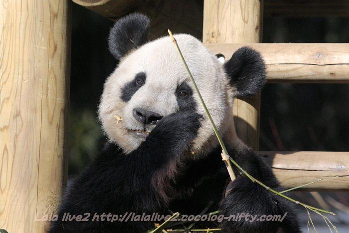 Panda201501202