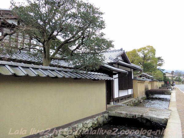 Kamigamo201502176