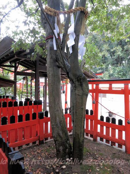 Shimogamo2015021712