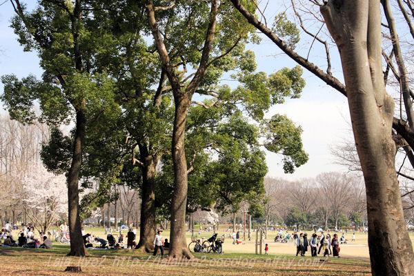 Park20150328