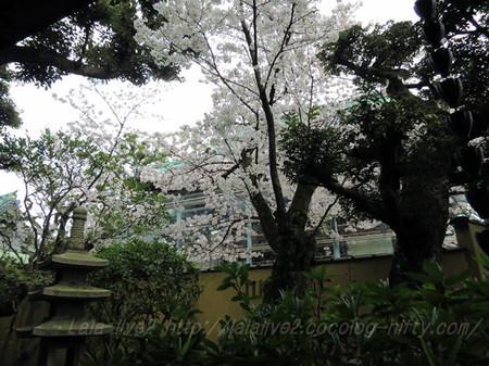 Shibamata39
