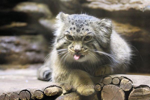 Cat201501203