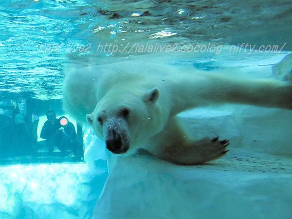 Polarbear201501205