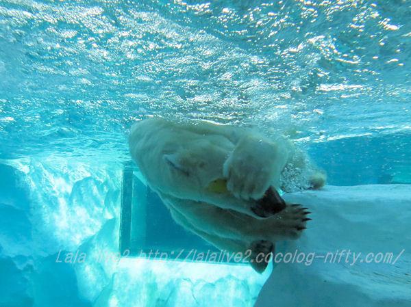 Polarbear201501206