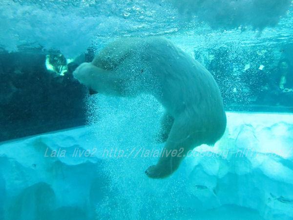 Polarbear201501207