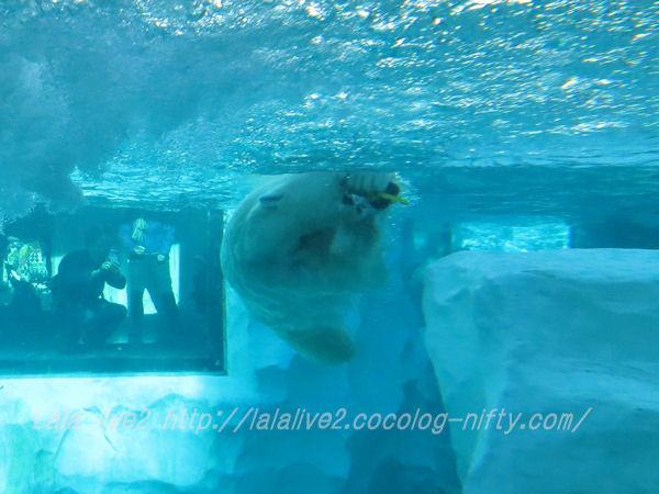 Polarbear201501208