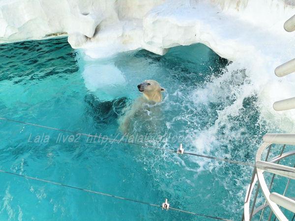 Polarbear201501209