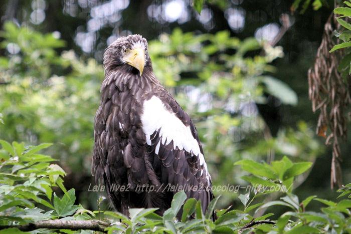 Eagle20150608