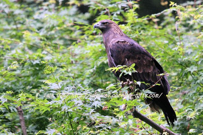 Eagle201506081