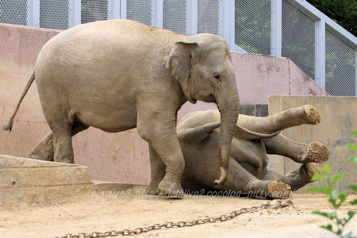 Elephants201506081