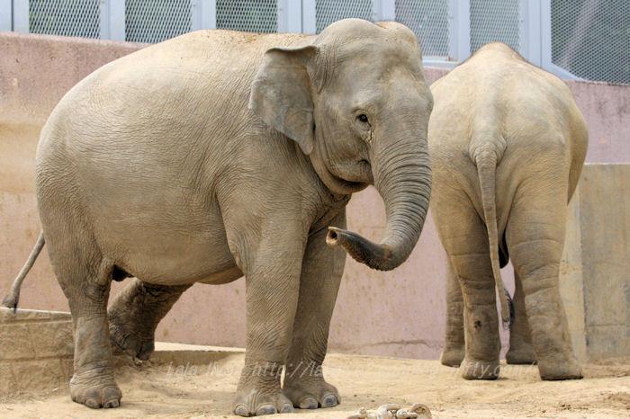 Elephants201506083