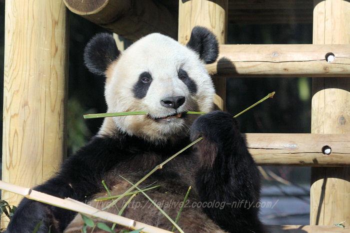 Panda201501204