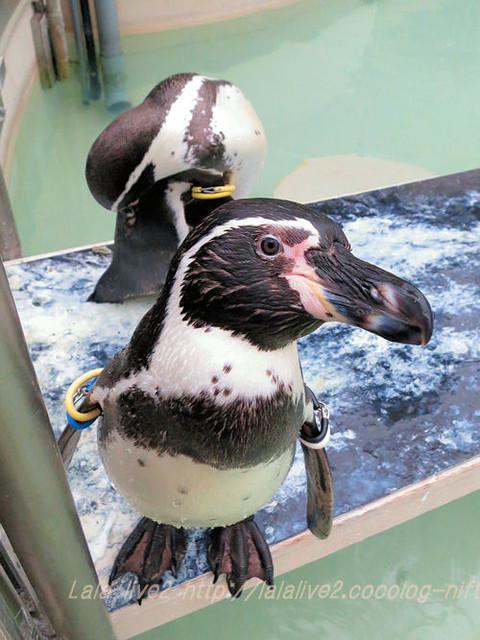 Penguin201511176_2