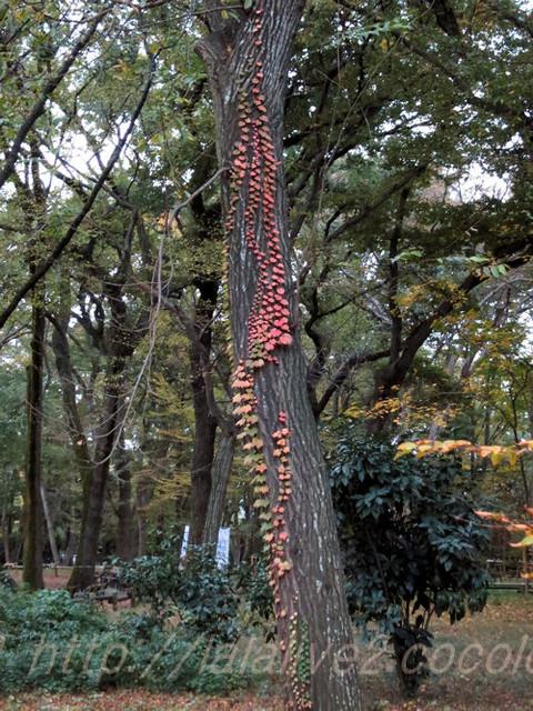 Leaves20151117