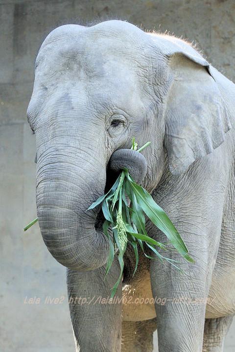 Elephant20151020