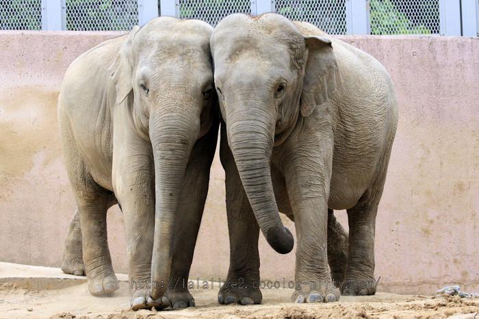 Elephantsnakayoshi