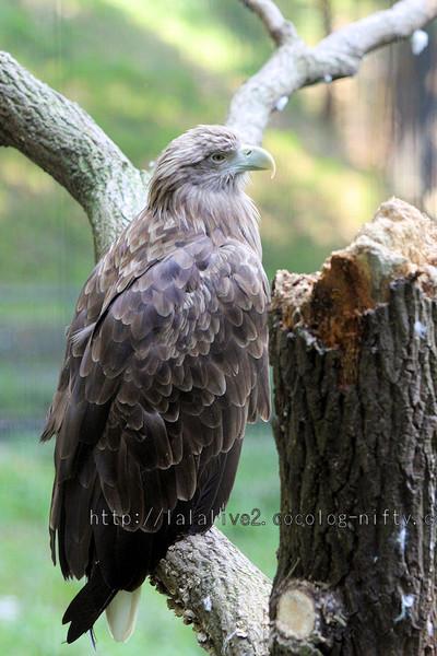 Eagle20151020_2