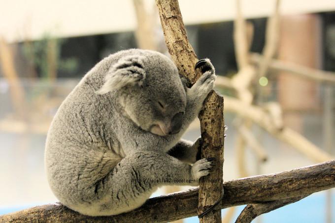 Koala201602152