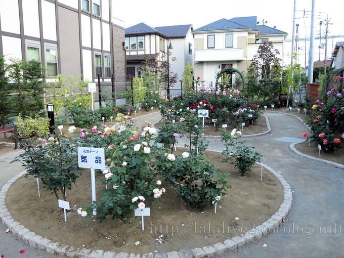 Rose_garden201605