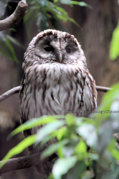 Owl201606