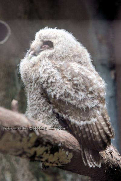 Owl2016062