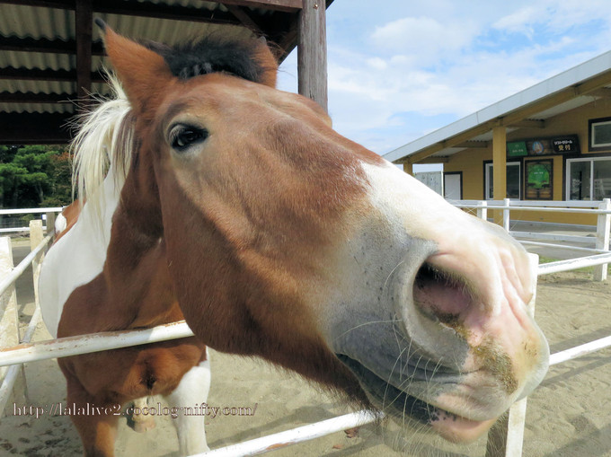Horse2016101