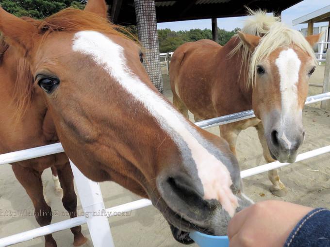 Horses201610