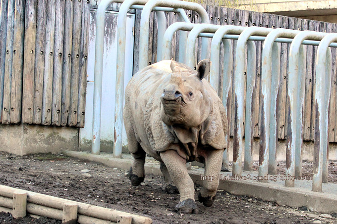 Rhinoceros2016122