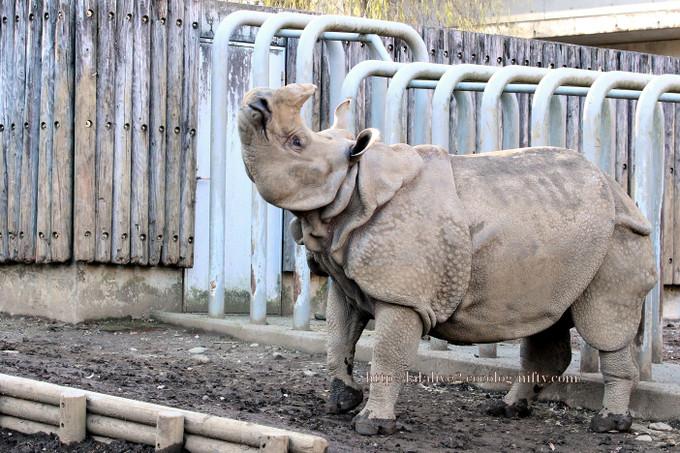 Rhinoceros2016123