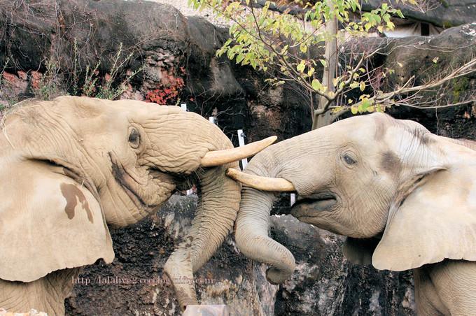 Elephants201611