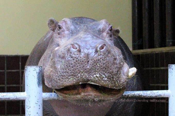 Hippojiro