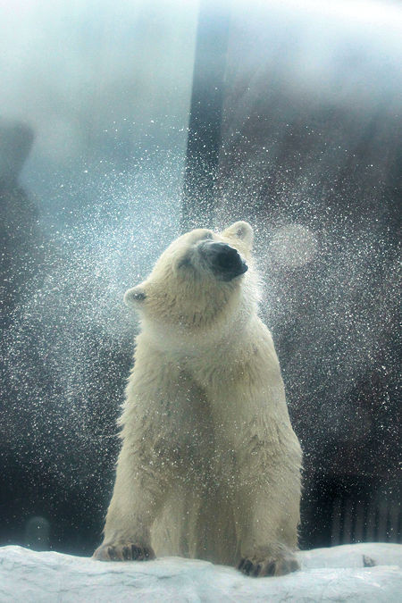 Polar2017092