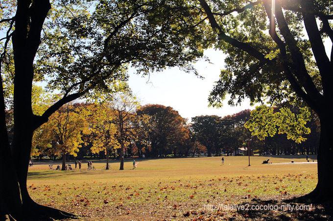 Park_in_autumn
