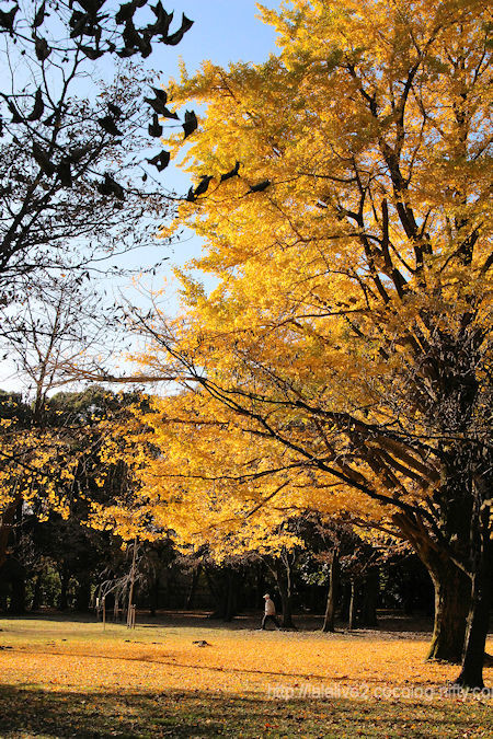 Park_in_autumn1