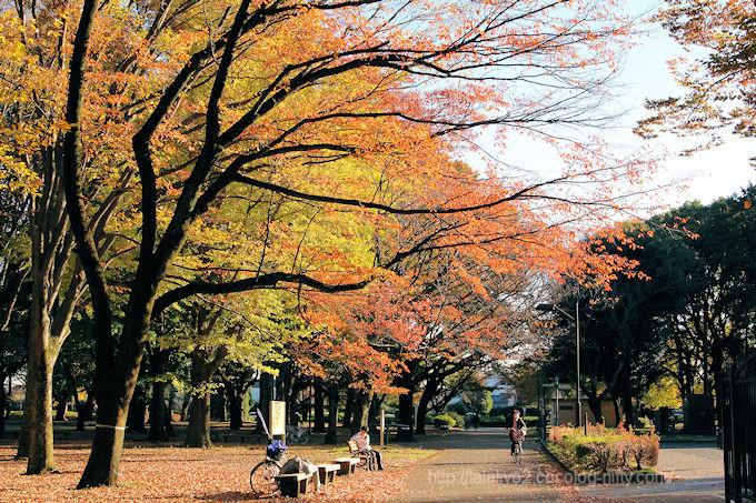 Park_in_autumn2