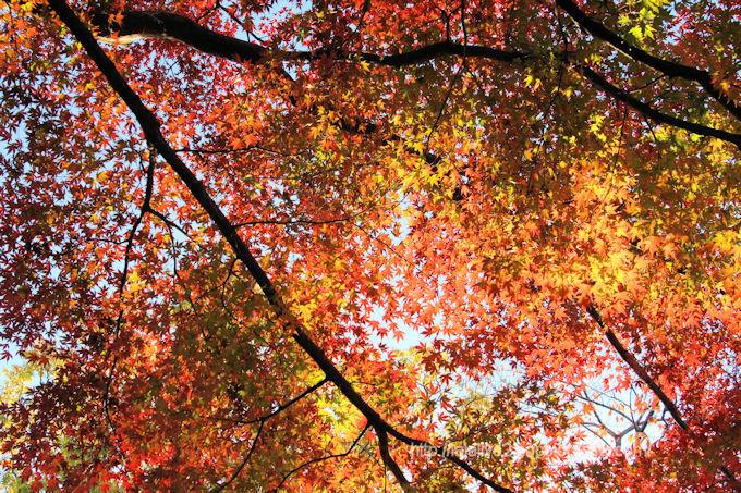 Park_in_autumn3