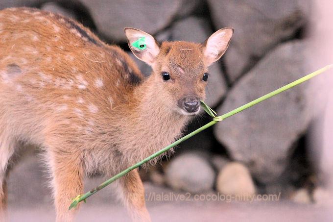 Deer201806